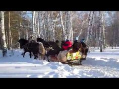 Over The River And Through The Woods (Lyrics in Description) Christmas Lyrics, Christmas Music, Winter Christmas, Christmas Ideas, Thanksgiving Songs, Snowy Woods, Have A Happy Day, Over The River, Woodland