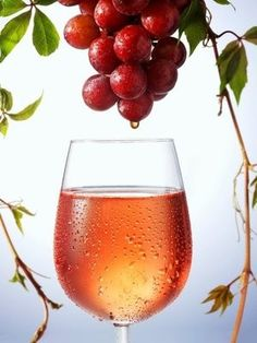 Vino D.O. Rioja. Rosé