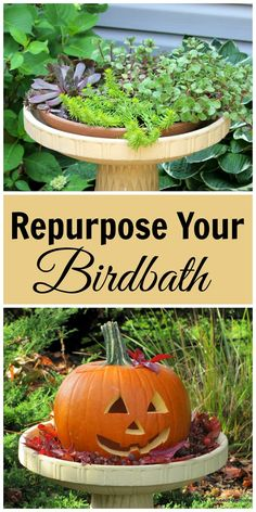 Birdbaths aren't just for birds anymore!  They are great for repurposing and upcycling.