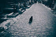 Gdansk Cat