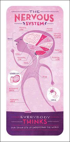nervous system  by rachel ignotofsky