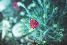 Photography Fine Art Print Spring Flowers by VanBurensHomeDecor, $15.00