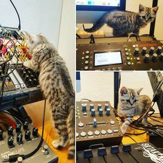 I want a kitten in my studio everyday! So cute.     Instagram photo by @benny_responder