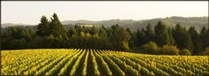 Patton Valley Vineyard along Oregon's Sip 47 Wine Route in the Willamette Valley.