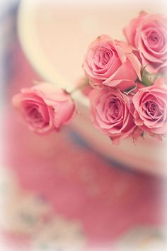 Untitled Pink Roses Photo