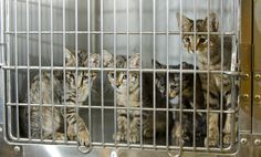 It's kitten season which is why June is also Adopt A Cat month! Here's how to help...