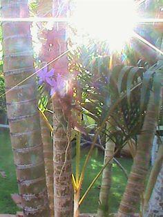 Floração da orquídea e o nascer do sol.