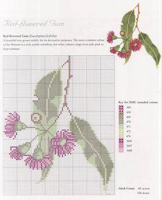 Red-Flowered Gum - free cross stitch pattern