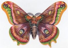 *The Graphics Fairy LLC*: Amazing Victorian Butterfly!!