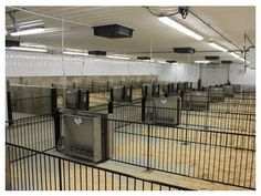 how to build a cool room for show cattle