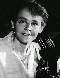 Barbara McClintock fue una científica estadounidense especializada en citogenética que obtuvo el premio Nobel de Medicina o Fisiología en 1983. McClintock se doctoró en Botánica en 1927 por la Universidad Cornell, donde posteriormente lideró el grupo de citogenética del maíz. A finales de la década de 1920, estudió los cambios que acontecen en los cromosomas durante la reproducción del maíz, poniendo de manifiesto mediante métodos de microscopía desarrollados en su laboratorio.