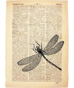 dragonfly! $8.50