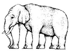 This is the famous elephant legs optical illusion and it's definitely a tough one. The object of this optical illusion is to count the number of the legs. Illusion Test, Image Illusion, Illusion Pictures, Optical Illusions For Kids, Eye Illusions, Art Optical, Funny Illusions, Eye Tricks, Mind Tricks