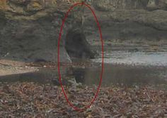 real ghost photos December 2013 | Real Ghost Pictures: Haunting On The Beach | Paranormal 360:
