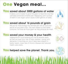 One Vegan meal Eine Vegane Mahlzeit