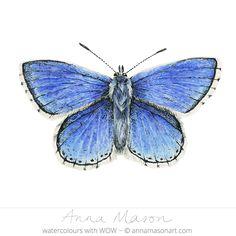 Adonis Blue Butterfly © 2014 ~ annamasonart.com - watercolour- 23 x 17 cm
