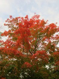 Gorgeous Fall Colors Shared by HGTVGardens Reader Jenni --> http://www.hgtvgardens.com/photos/falling-for-my-garden-0000013d-4fd5-db1b-a13f-5fddc6530000?s=2=pinterest