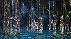 The Sunken Forest of Lake Kaindy, Kazakhstan #Lake #Kaindy #Kazakhstan  http://maladviagem.blogspot.pt/