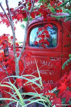 Vintage Trucks Old truck, autumn. Farm Trucks, Old Trucks, Pickup Trucks, Jeep Pickup, Lifted Trucks, Chevy Trucks, Looks Country, Country Fall, Pompe A Essence