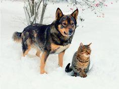 5 Deadliest Outdoor Dangers for Pets this Winter | petMD