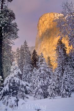 Winter sunrise lights up El Capitan monolith of Yosemite National Park   Photo by Dave Welling