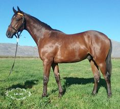 Lot 99 - Bejewelled Spring x Vercingetorix - Boland Stud Horse Racing, Race Horses, Horses For Sale, Siblings, Singapore, Handsome, Stars, Spring, Animals