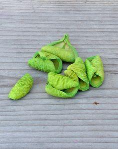 Friss zöld színű lali száraz termés.
