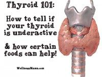 Thyroid 101 - Is your thyroid making you fat?