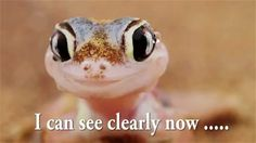 Funny animal video - Web Footed Gecko