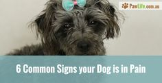 6 Common Signs your Dog is in Pain