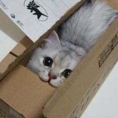 cat in a box ... do you see me?..lol