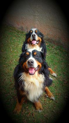 Zeus e Bucky