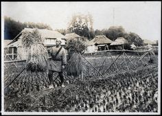 Rice Harvest 2 by A. Davey, via Flickr