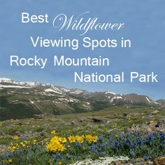 Best Wildflower Viewing Spots in Rocky Mountain National Park, Estes Park, Colorado