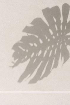 light and shadow photography inspiration monstera leaf summer mood botanic inspiration Light And Shadow Photography, Sun Blinds, Cream Aesthetic, Aesthetic Light, Nature Aesthetic, Shadow Play, Sun Shadow, Photocollage, Pics Art