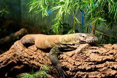 Houston Texas Zoo #photography #lizard #zoo