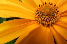 Garden flowers - Extreme closeup - 151