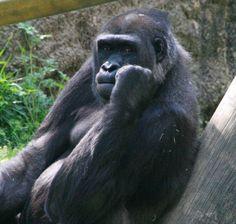 I see you!  Memphis Zoo