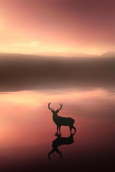 archangvl: Tranquil Dawn | Jenny Woodward Deer remind me of my brother that I love and miss so much!!!!