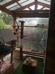 Our last outdoor cat enclosure