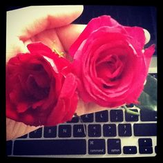 You make my day #roses #love #pink #red You make my day #roses #love #pink #red