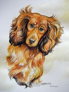Longhaired Daschund by HouseofChabrier Ann Shoemaker-Magdaleno.    Watercolor