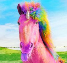 ...unicorn...