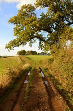https://flic.kr/p/aAwmHa | MUDDY WALK | A walk in the countryside near Barnt Green Worcestershire England.