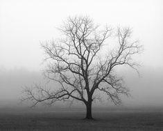 Black and white photography / trees / landscape photography / tree photography / winter tree / 8 x 10 print. $40.00, via Etsy.