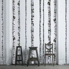 Birch tree wall stickers - just need to decide on wall color...
