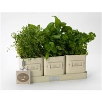 Herb Pots in a Tray - Cream