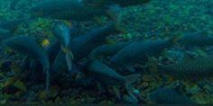 Cibulan Tempat Wisata Kuningan Terkenal dengan Legenda Ikan Dewa