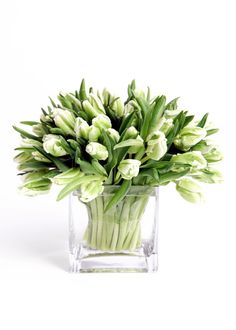 green and white parrot tulips | Graham