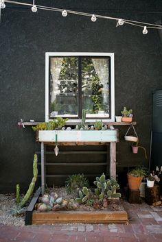 succulent + cacti potting area